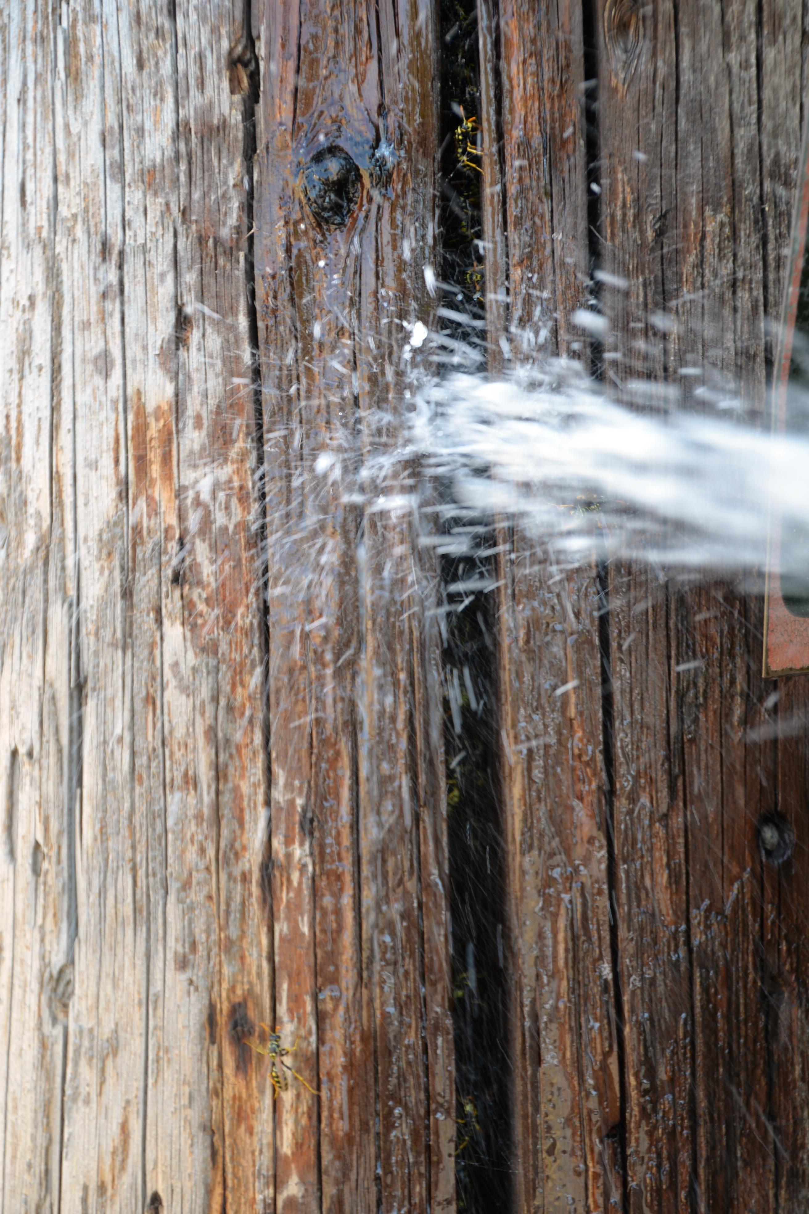 Nontoxic Pest Control for Your Home and Garden
