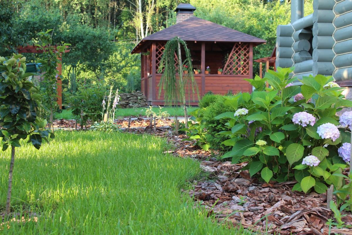 Companion Planting as Natural Pest Control